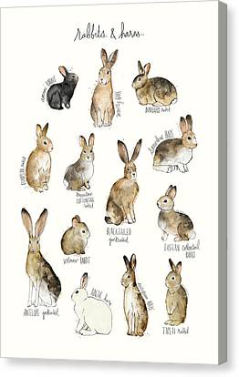 Rabbits And Hares Canvas Print by Amy Hamilton
