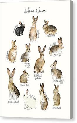 Rabbits And Hares Canvas Print by Amy Hamilton