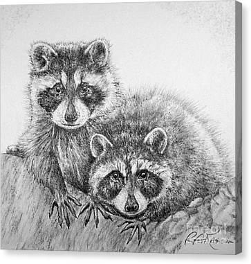Raccoon Pals Canvas Print by Roy Anthony Kaelin