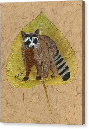 Raccoon Canvas Print by Ralph Root