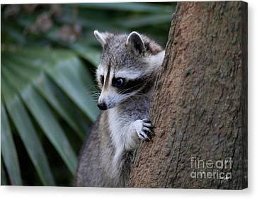 Raccoon Canvas Print by Scott Pellegrin