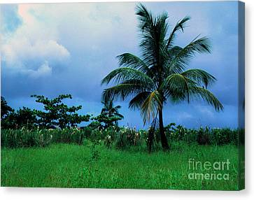 Rain Cloudsover Dominica Canvas Print by Thomas R Fletcher