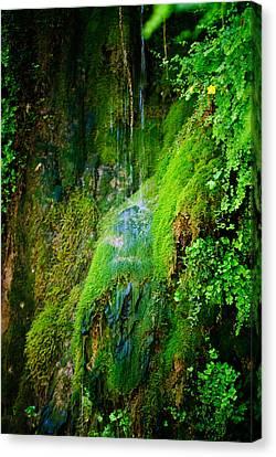 Rain Forest Canvas Print by Louis Dallara
