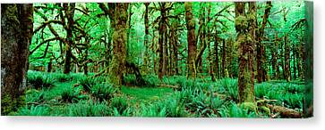 Rain Forest, Olympic National Park Canvas Print by Panoramic Images