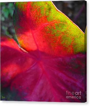 Rainbow Coleus 2 Canvas Print by Jeff Breiman