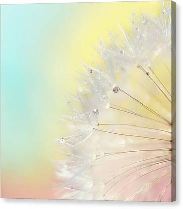 Rainbow Connection II Canvas Print by Amy Tyler