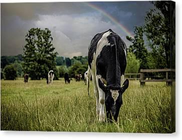 Rainbow Cow Canvas Print by Martin Newman