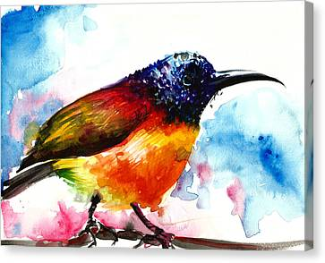 Rainbow Hummingbird Watercolor Canvas Print by Tiberiu Soos