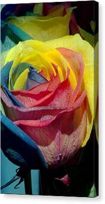 Rainbow Of Love 2 Canvas Print by Karen Musick