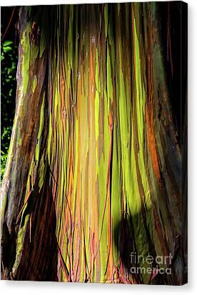 Rainbow Tree Canvas Print by Jon Burch Photography