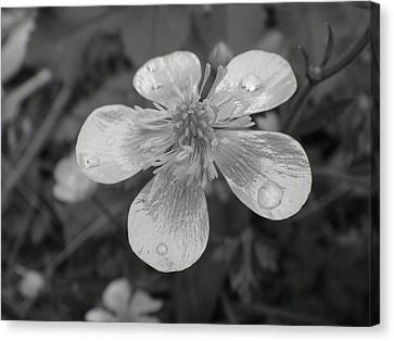 Flowers Canvas Print featuring the photograph Raindrops by Roberto Alamino