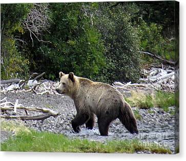 Rainforest Grizzly Canvas Print by Harriet Peck Taylor