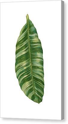 Rainforest Resort - Tropical Banana Leaf  Canvas Print by Audrey Jeanne Roberts