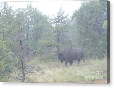 Rainy Day For The Bison Canvas Print by Tamyra Ayles