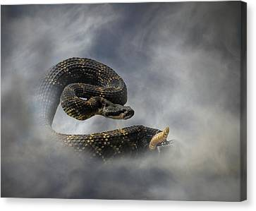 Rattle Snake Canvas Print by Stephanie Laird