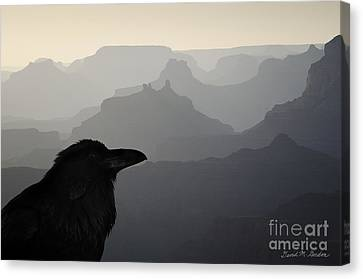 Raven And Grand Canyon Canvas Print by Dave Gordon