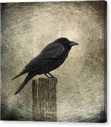 Raven Canvas Print by Elena Nosyreva