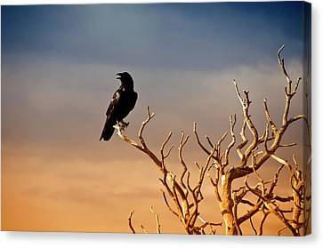 Raven On Sunlit Tree Branches, Grand Canyon Canvas Print by Trina Dopp Photography