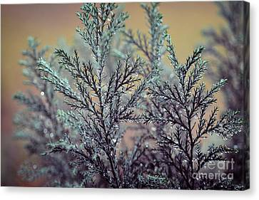 RD Canvas Print by SK Pfphotography
