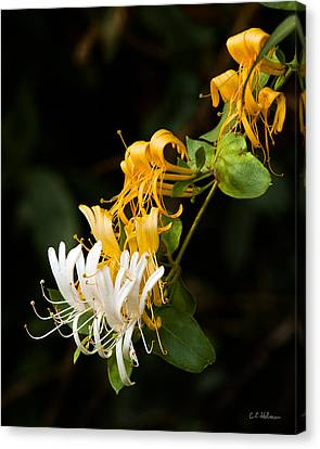 Reaching Canvas Print by Christopher Holmes