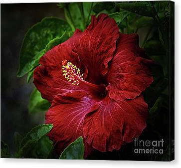 Reaching Out Canvas Print by Arnie Goldstein