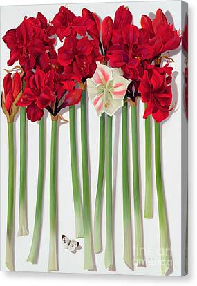 Red Amaryllis With Butterfly Canvas Print by Lizzie Riches