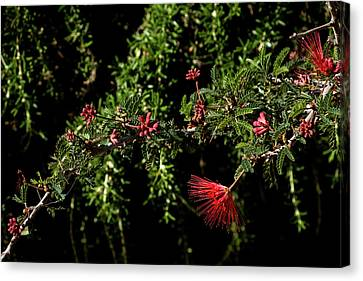 Red And Black Canvas Print by Glenn DiPaola