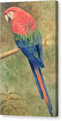 Red And Blue Macaw Canvas Print by Henry Stacey Marks