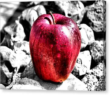 Red Apple Canvas Print by Karen M Scovill