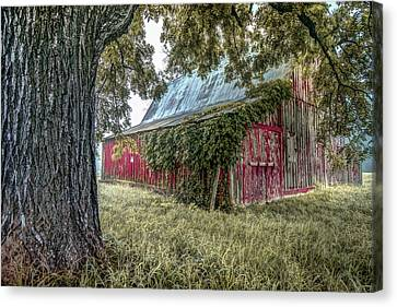 Red Barn And Framing Tree Canvas Print by Gregory Ballos