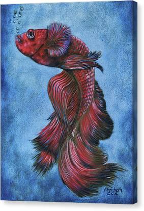 Red Betta Canvas Print by Elizabeth Cox