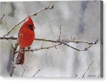 Red Bird Of Winter Canvas Print by Jeff Kolker