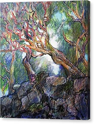 Red Branch Cypress, Point Lobos Canvas Print by Bill Jeng