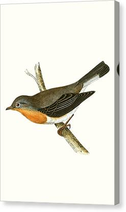 Red Breasted Flycatcher Canvas Print by English School