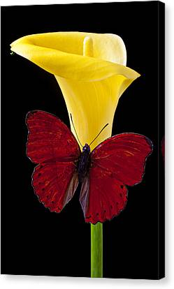 Red Butterfly And Calla Lily Canvas Print by Garry Gay