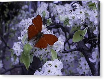 Red Butterfly On Cherry Blossoms Canvas Print by Garry Gay