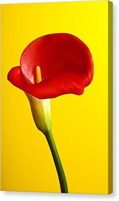 Red Calla Lilly  Canvas Print by Garry Gay