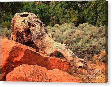 Red Cliffs Wooly Mammoth Canvas Print by Adam Jewell