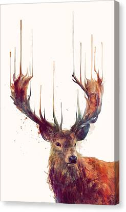 Red Deer Canvas Print by Amy Hamilton