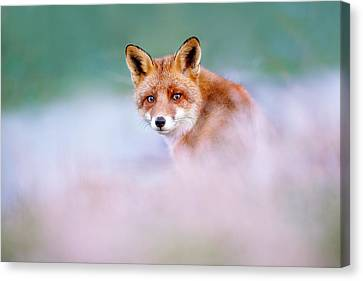 Red Fox In A Mysterious World Canvas Print by Roeselien Raimond