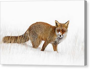Red Fox In A Snow Covered Scene Canvas Print by Roeselien Raimond