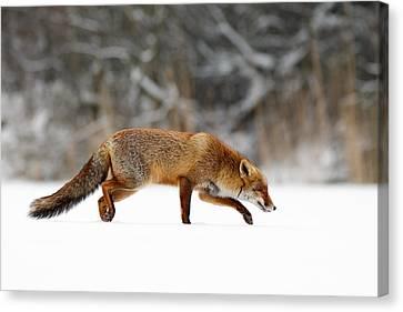 Red Fox Running Through A White World Canvas Print by Roeselien Raimond