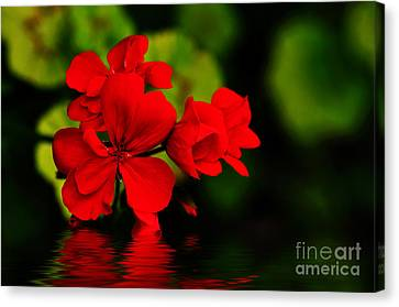 Red Geranium On Water Canvas Print by Kaye Menner