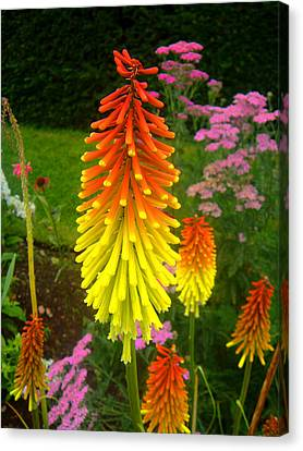 Flowers Canvas Print featuring the photograph Red Hot Poker by Roberto Alamino