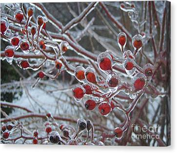 Red Ice Berries Canvas Print by Kristine Nora