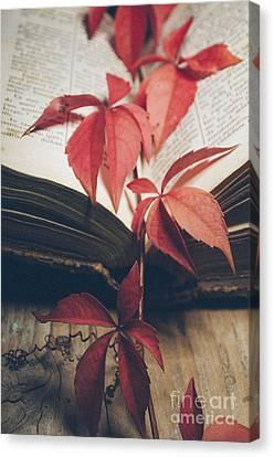 Red Ivy Canvas Print by Jelena Jovanovic