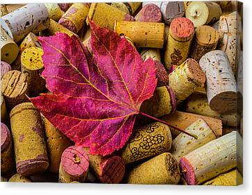 Red Leaf On Wine Corks Canvas Print by Garry Gay