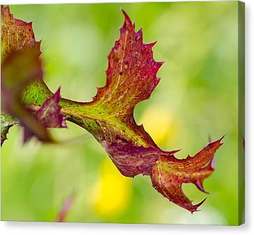 Red Leaf With Green Background Canvas Print by Don L Williams