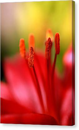 Red Lily Abstract One Canvas Print by Tony Ramos