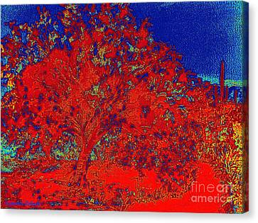 Red Palo Verdi Canvas Print by Summer Celeste